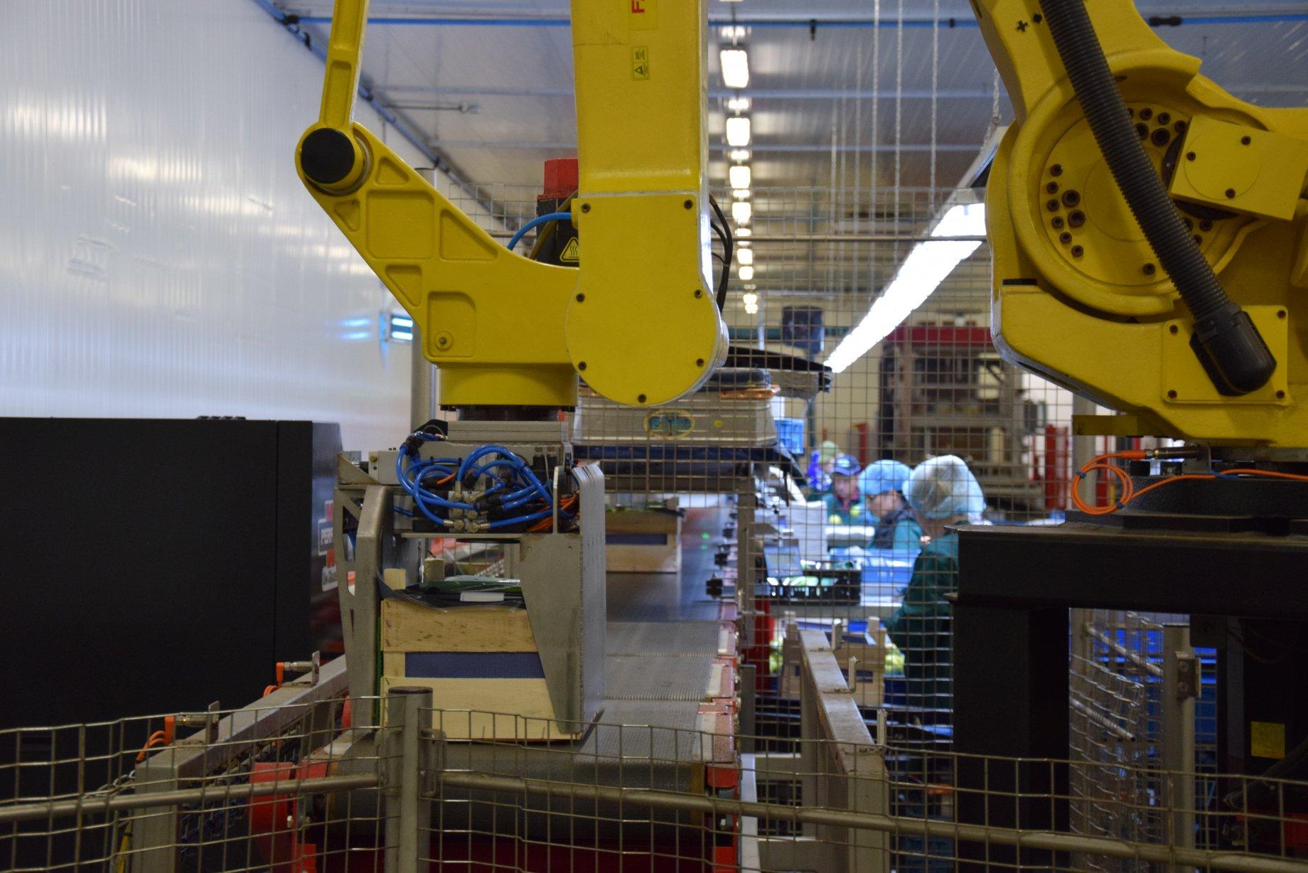 Sorteerrobot bij Fruit Packing Zeeland