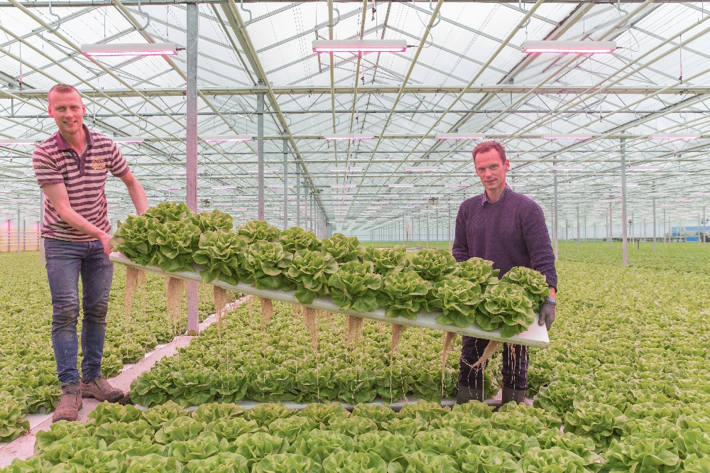 The Greenery sees profits increase again in 2017