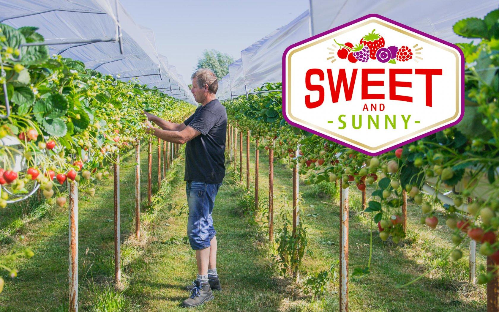 Lancering Sweet and Sunny assortiment van aardbeien, frambozen, blauwe bessen, rode bessen en bramen