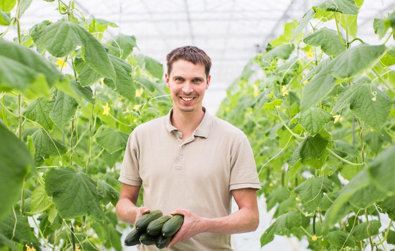 Eerste komkommers uit belichte teelt geveild
