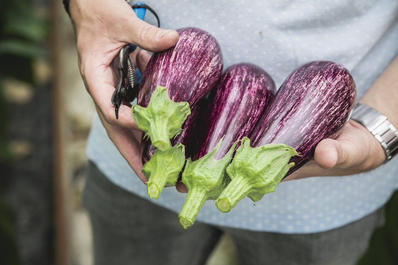 Graffiti aubergines vallen op in het schap en op het bord