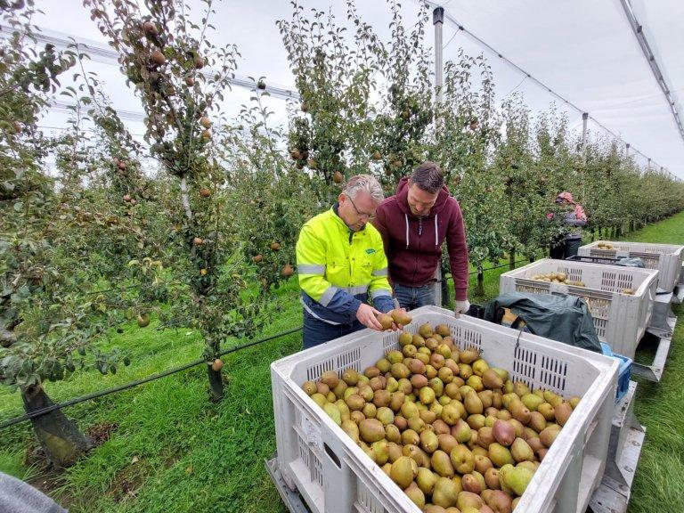 """""""De peren zijn heerlijk zoet van smaak. Ook de blos is mooi gestreept en rood van kleur"""", vertelt Ton van Wiggen (verkoper The Greenery Growers)."""