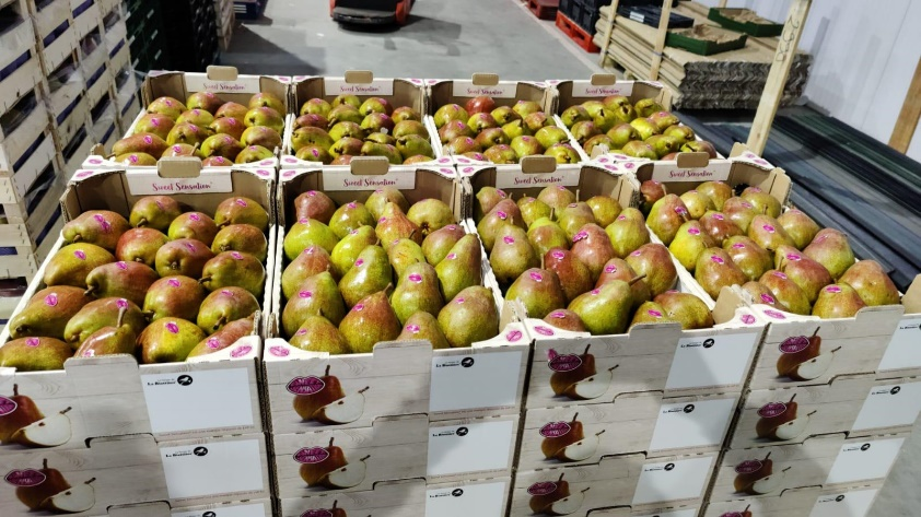 Sweet Sensation, sterk merk in de perenmarkt